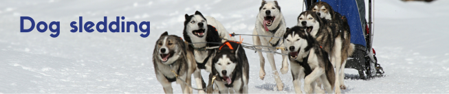 Dog sledding.png